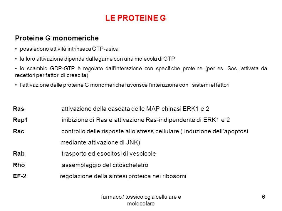 farmaco / tossicologia cellulare e molecolare 6 LE PROTEINE G Proteine G monomeriche possiedono attività intrinseca GTP-asica la loro attivazione dipe