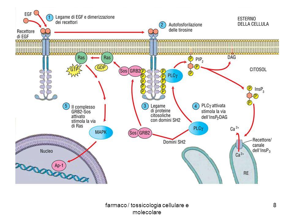 farmaco / tossicologia cellulare e molecolare 8