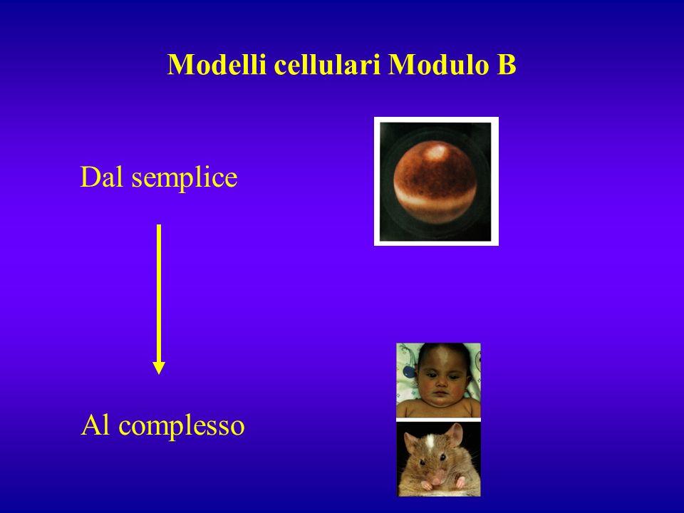 Modelli cellulari Modulo B Dal semplice Al complesso