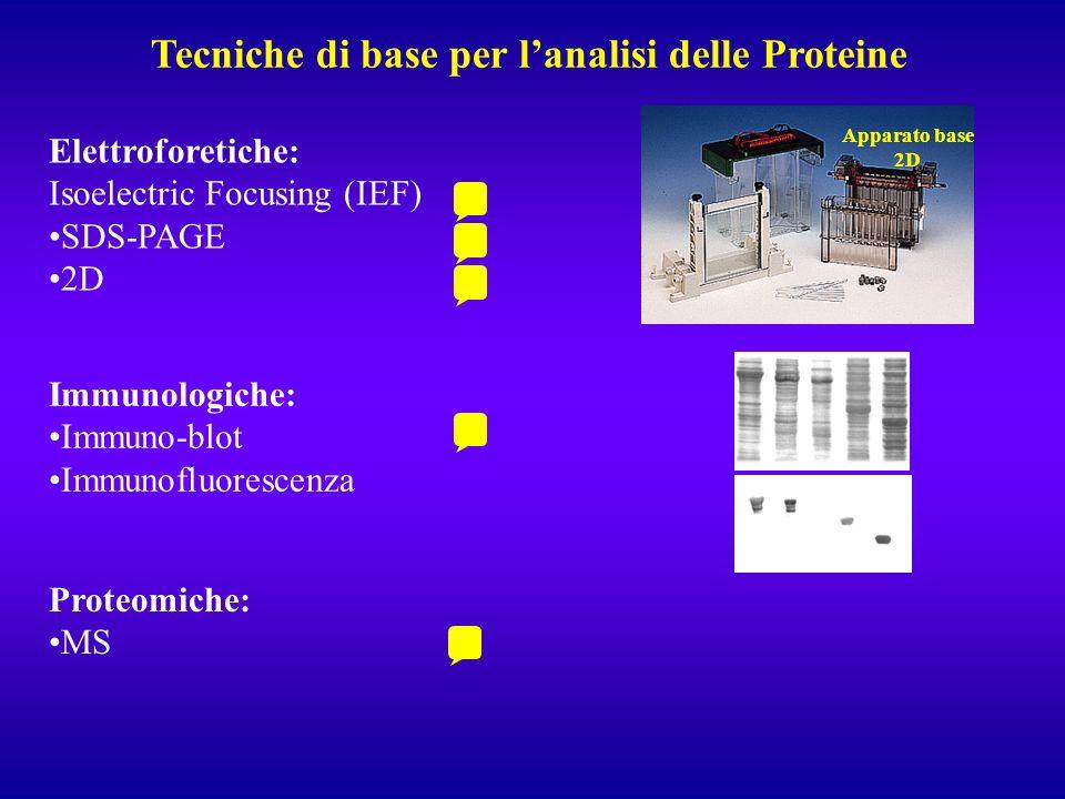 Tecniche di base per lanalisi delle Proteine Apparato base 2D Elettroforetiche: Isoelectric Focusing (IEF) SDS-PAGE 2D Immunologiche: Immuno-blot Immu