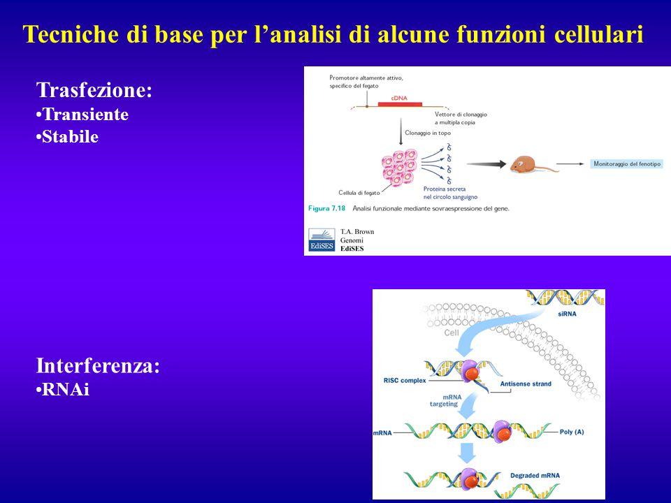 Tecniche di base per lanalisi di alcune funzioni cellulari Trasfezione: Transiente Stabile Interferenza: RNAi