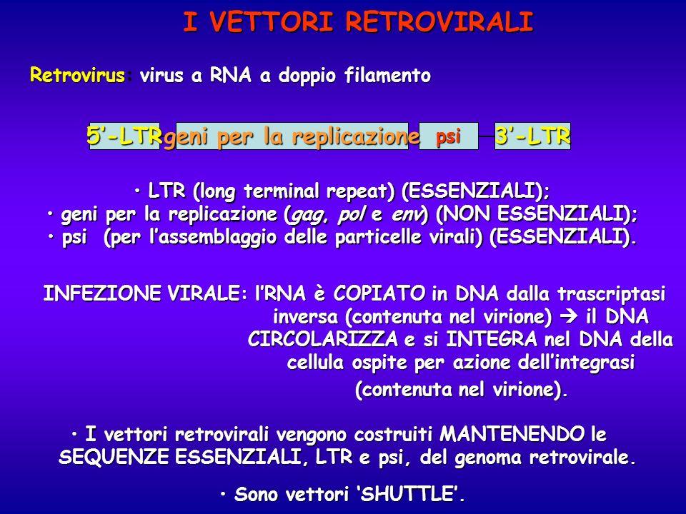 I VETTORI RETROVIRALI Retrovirus: virus a RNA a doppio filamento 5-LTR3-LTRpsi geni per la replicazione LTR (long terminal repeat) (ESSENZIALI); LTR (