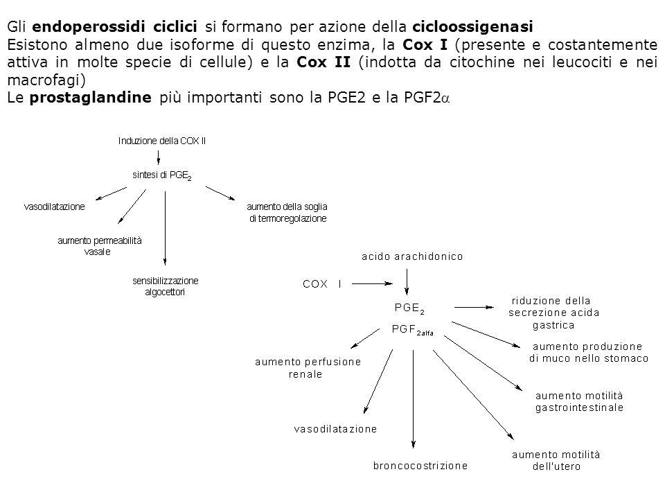 Gli endoperossidi ciclici si formano per azione della cicloossigenasi Esistono almeno due isoforme di questo enzima, la Cox I (presente e costantement