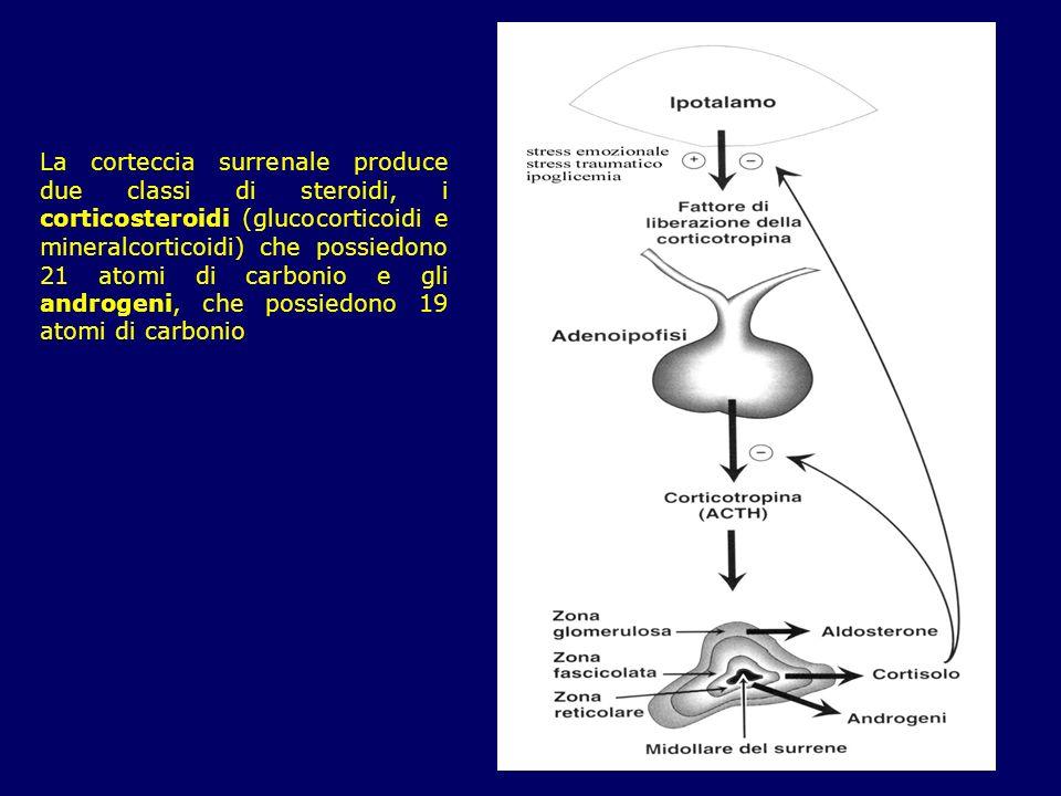 La corteccia surrenale produce due classi di steroidi, i corticosteroidi (glucocorticoidi e mineralcorticoidi) che possiedono 21 atomi di carbonio e g