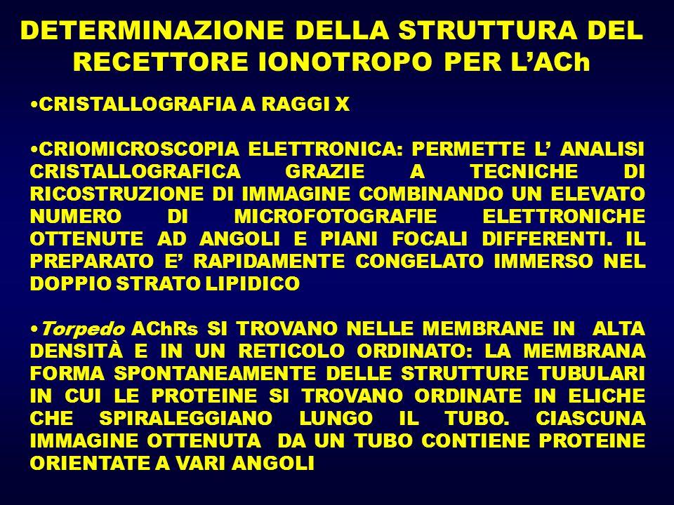 DETERMINAZIONE DELLA STRUTTURA DEL RECETTORE IONOTROPO PER LACh CRISTALLOGRAFIA A RAGGI X CRIOMICROSCOPIA ELETTRONICA: PERMETTE L ANALISI CRISTALLOGRAFICA GRAZIE A TECNICHE DI RICOSTRUZIONE DI IMMAGINE COMBINANDO UN ELEVATO NUMERO DI MICROFOTOGRAFIE ELETTRONICHE OTTENUTE AD ANGOLI E PIANI FOCALI DIFFERENTI.