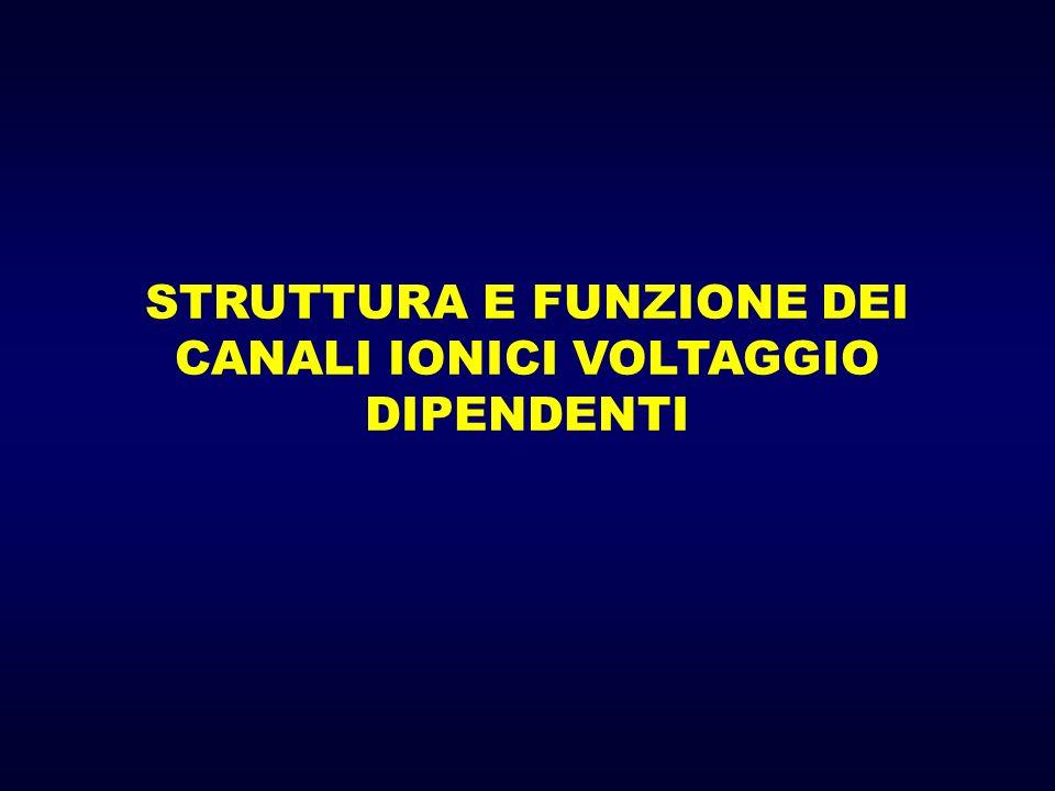 STRUTTURA E FUNZIONE DEI CANALI IONICI VOLTAGGIO DIPENDENTI