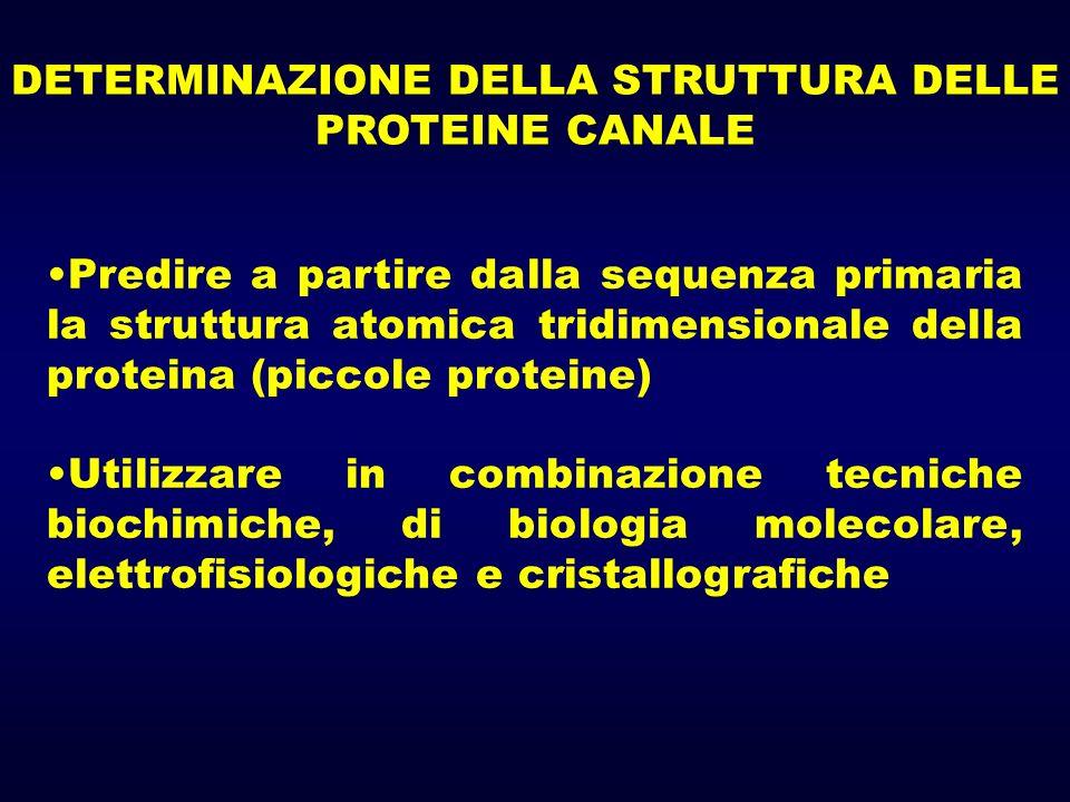 DETERMINAZIONE DELLA STRUTTURA DELLE PROTEINE CANALE Predire a partire dalla sequenza primaria la struttura atomica tridimensionale della proteina (piccole proteine) Utilizzare in combinazione tecniche biochimiche, di biologia molecolare, elettrofisiologiche e cristallografiche