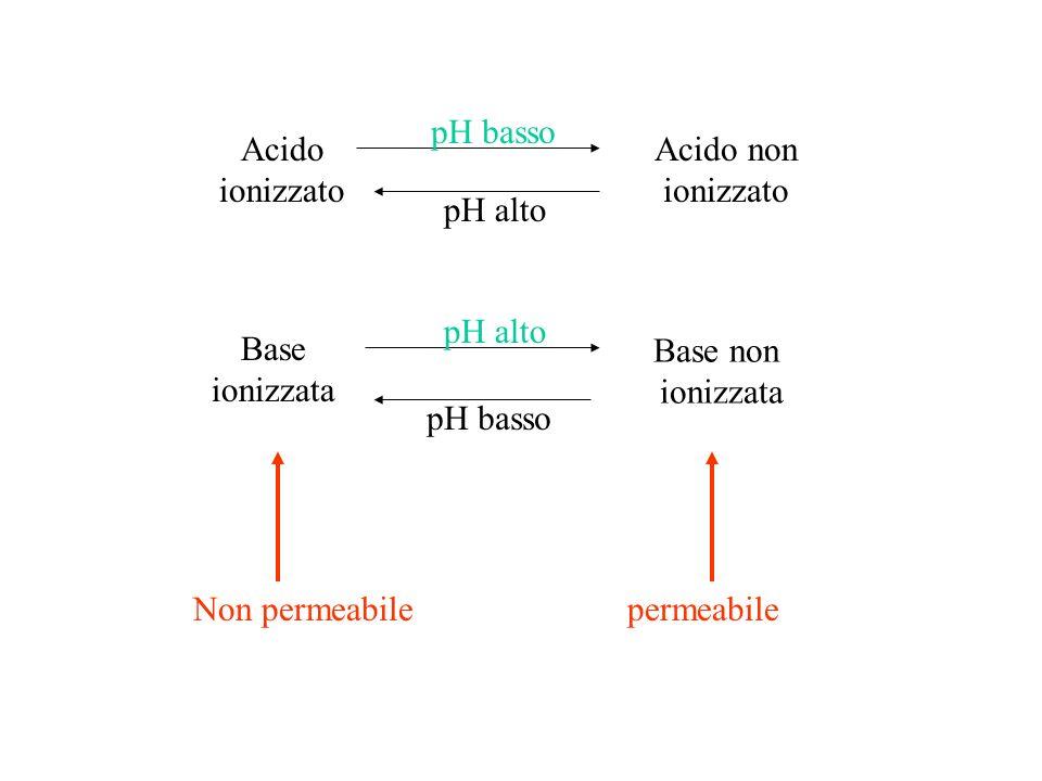 Acido ionizzato Acido non ionizzato pH basso pH alto Base ionizzata Base non ionizzata pH alto pH basso Non permeabilepermeabile