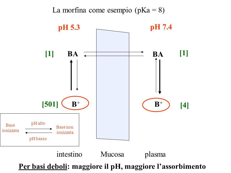 La morfina come esempio (pKa = 8) Mucosaintestinoplasma pH 5.3 pH 7.4 BA B+B+ B+B+ Base ionizzata Base non ionizzata pH alto pH basso [1] [501] [1] [4
