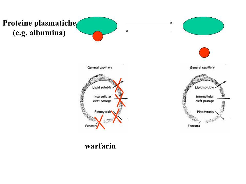 warfarin Proteine plasmatiche (e.g. albumina)