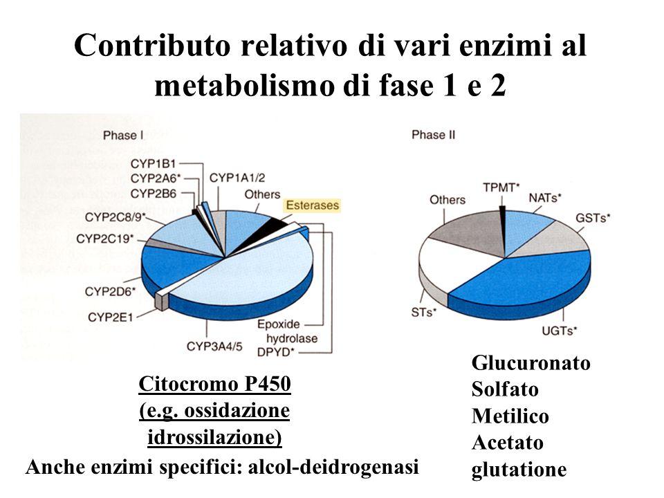 Contributo relativo di vari enzimi al metabolismo di fase 1 e 2 Citocromo P450 (e.g. ossidazione idrossilazione) Glucuronato Solfato Metilico Acetato
