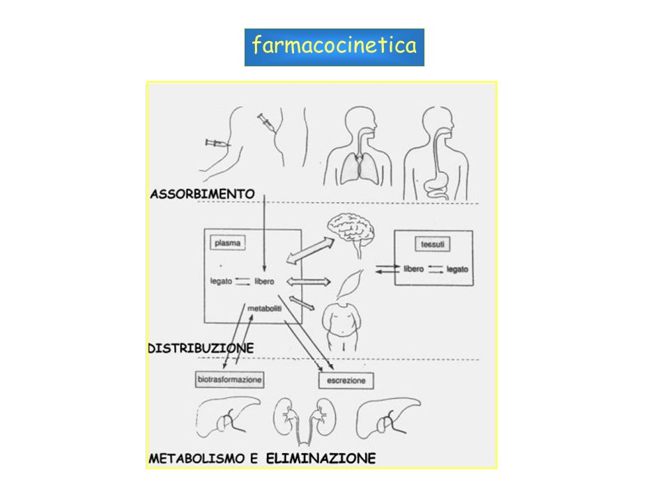 Volume di distribuzione = (quantita di farmaco nel corpo)/(concentrazione plasmatica) uomo di 70 Kg sangue 5.5 litri0.1 extracellulare12 litri0.2 Liquido totale42 litri0.6 Eparina0.1 L/Kg .