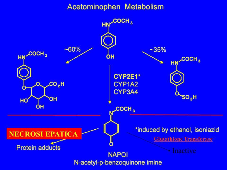 Glutathione Transferase Inactive NECROSI EPATICA