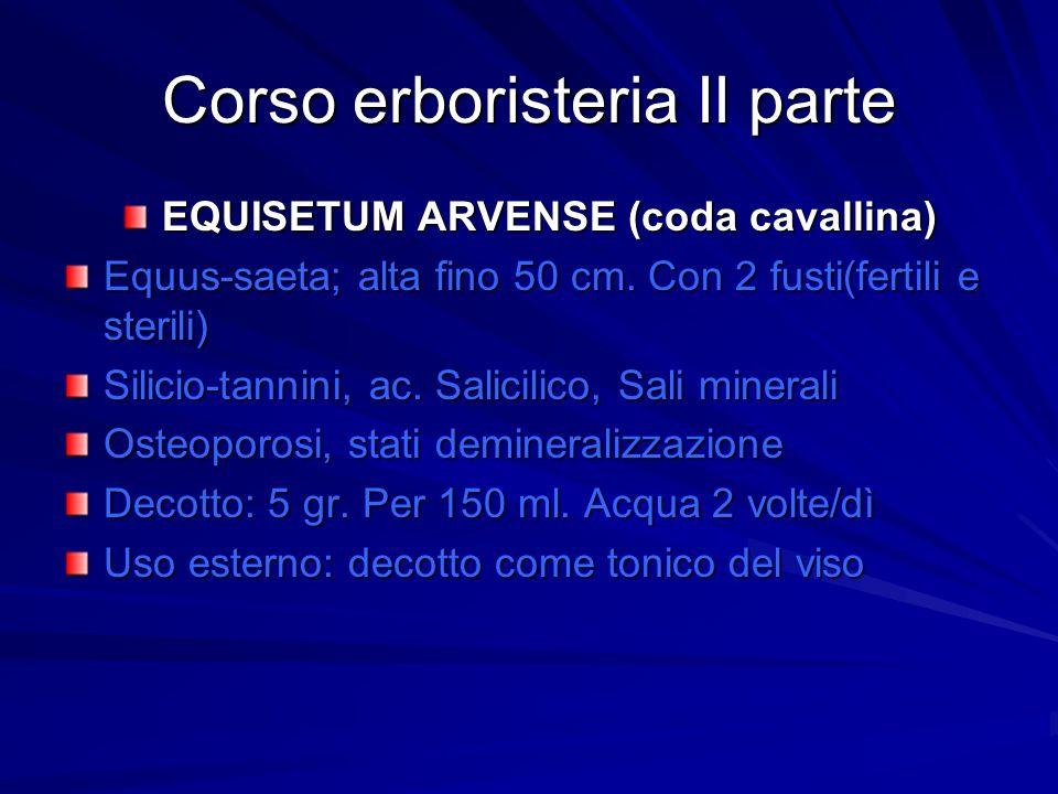 Corso erboristeria II parte EQUISETUM ARVENSE (coda cavallina) Equus-saeta; alta fino 50 cm. Con 2 fusti(fertili e sterili) Silicio-tannini, ac. Salic