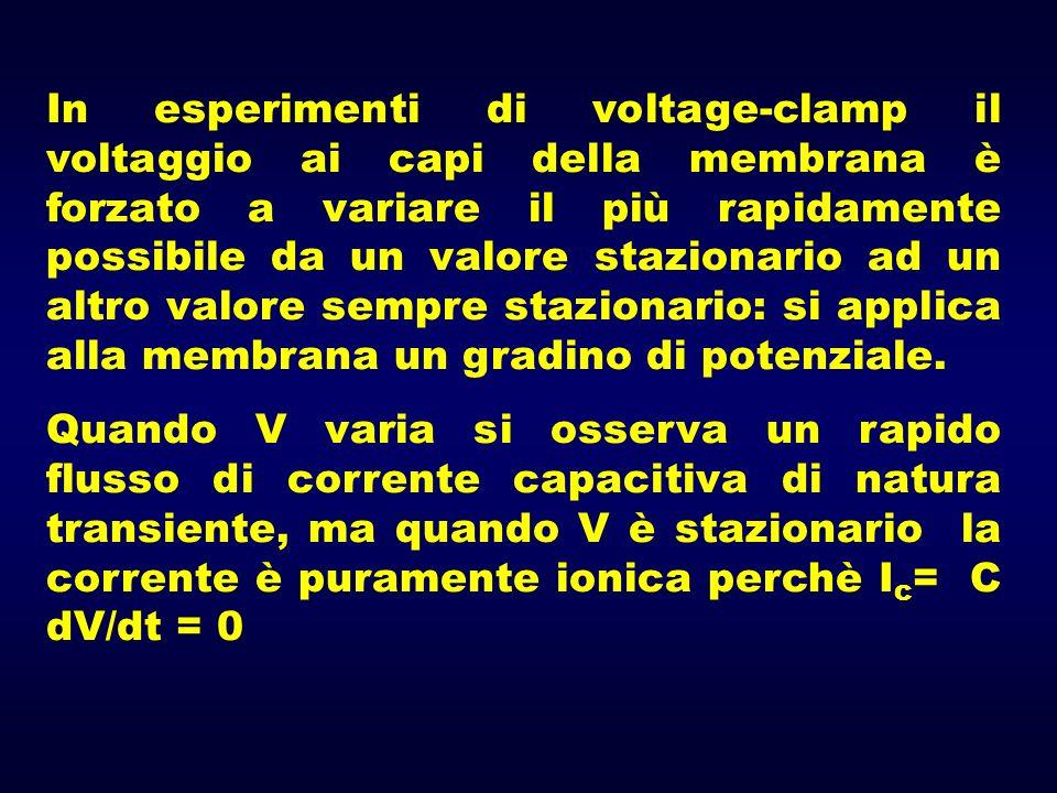 In esperimenti di voltage-clamp il voltaggio ai capi della membrana è forzato a variare il più rapidamente possibile da un valore stazionario ad un al