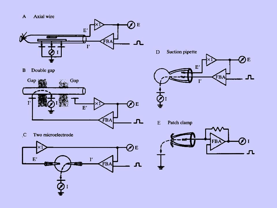 TECNICA DEL PATCH-CLAMP Permette la registrazione con alta risoluzione (fino a livello di singolo canale) di: correnti in pezzi di membrana della cellula (cell-attached) correnti in pezzi di membrana isolati dalla cellula (excised membrane patches: inside-out, outside-out) correnti e potenziali in cellule di piccole dimensioni (whole-cell current-clamp e voltage-clamp)