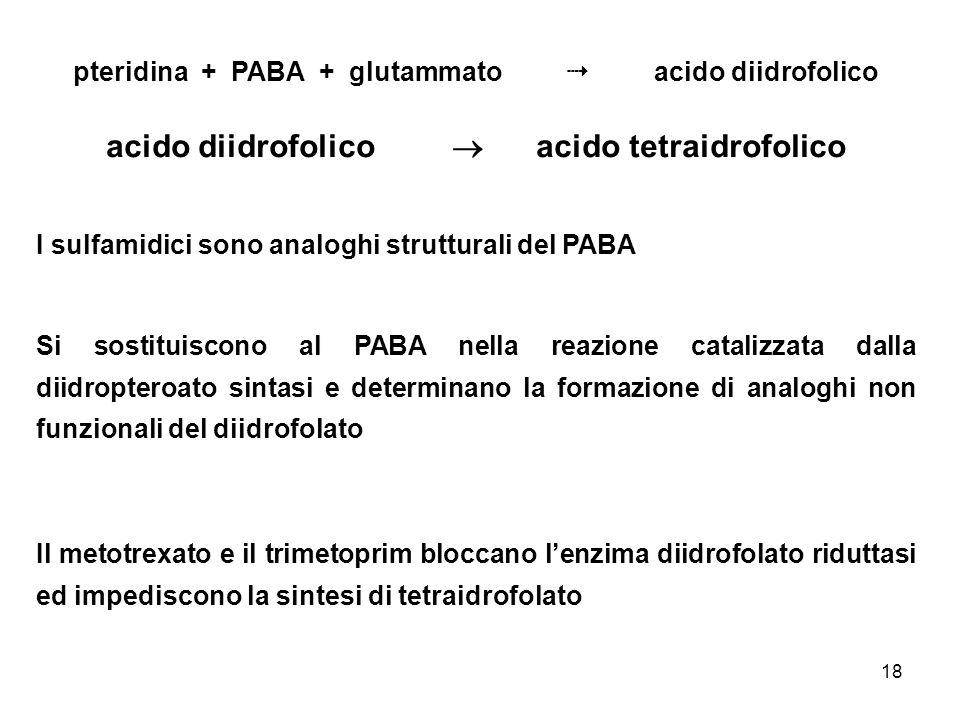 18 pteridina + PABA + glutammato acido diidrofolico acido diidrofolico acido tetraidrofolico I sulfamidici sono analoghi strutturali del PABA Si sosti