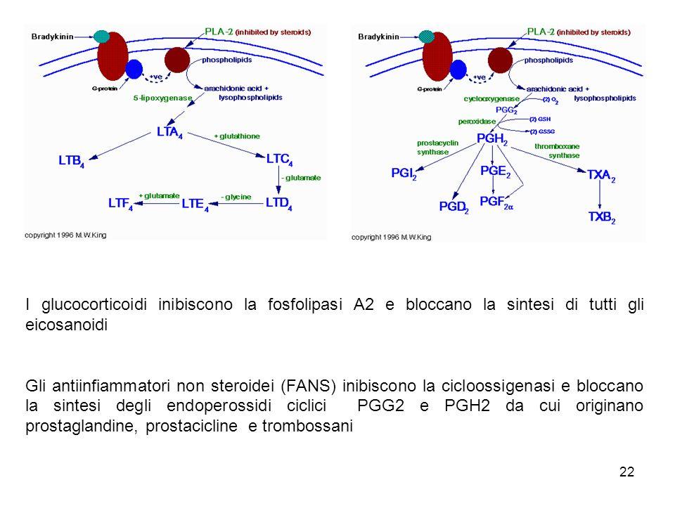 22 I glucocorticoidi inibiscono la fosfolipasi A2 e bloccano la sintesi di tutti gli eicosanoidi Gli antiinfiammatori non steroidei (FANS) inibiscono