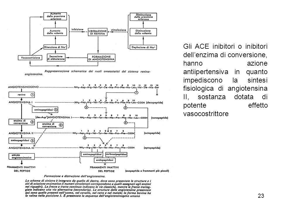 23 Gli ACE inibitori o inibitori dellenzima di conversione, hanno azione antiipertensiva in quanto impediscono la sintesi fisiologica di angiotensina