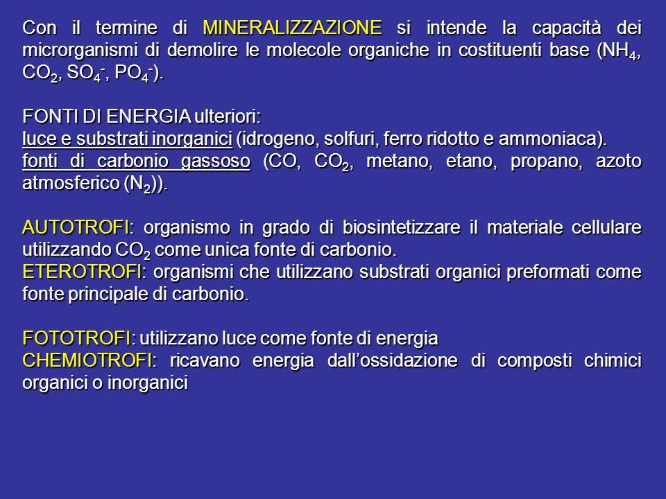 Con il termine di MINERALIZZAZIONE si intende la capacità dei microrganismi di demolire le molecole organiche in costituenti base (NH 4, CO 2, SO 4 -,