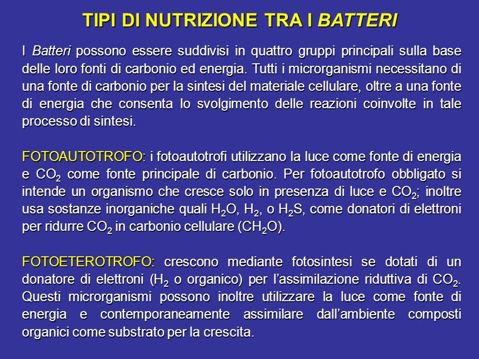 TIPI DI NUTRIZIONE TRA I BATTERI I Batteri possono essere suddivisi in quattro gruppi principali sulla base delle loro fonti di carbonio ed energia. T