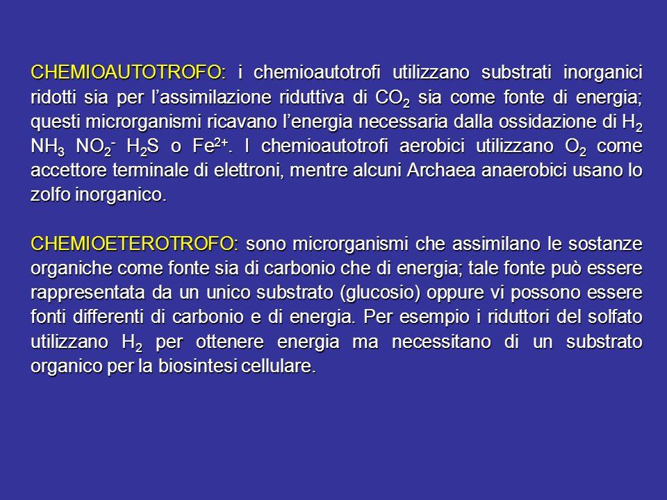 CHEMIOAUTOTROFO: i chemioautotrofi utilizzano substrati inorganici ridotti sia per lassimilazione riduttiva di CO 2 sia come fonte di energia; questi