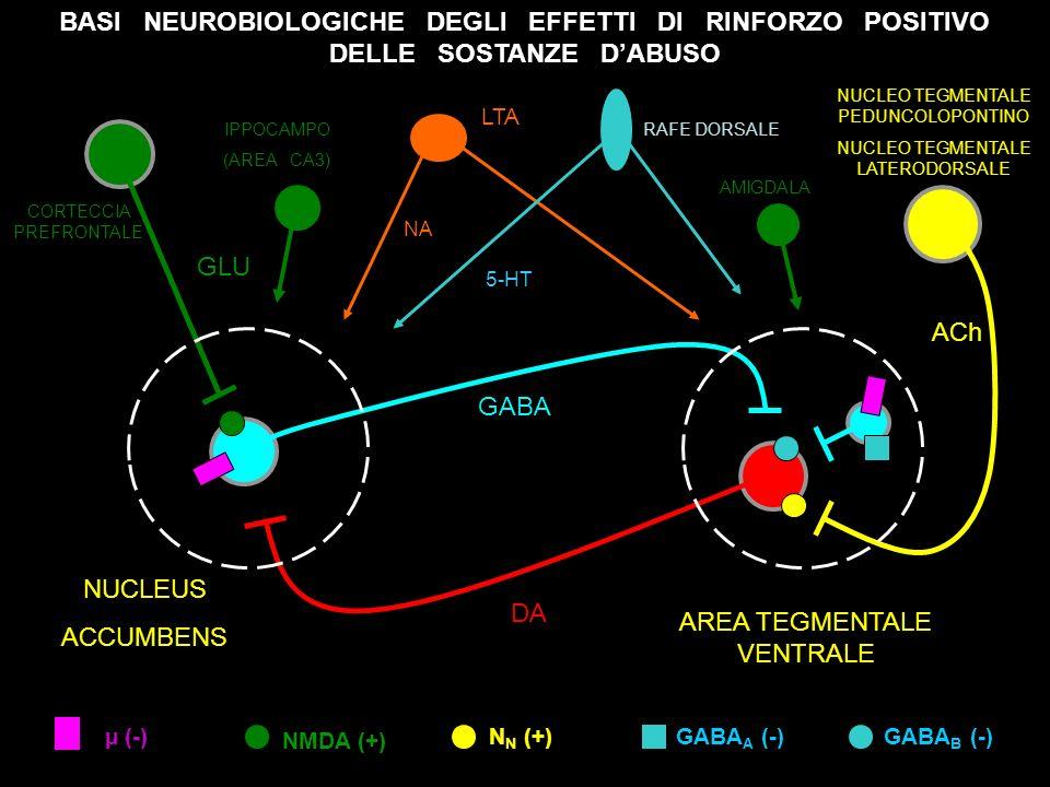 sostanze d abuso4 CORTECCIA PREFRONTALE IPPOCAMPO (AREA CA3) NUCLEO TEGMENTALE PEDUNCOLOPONTINO NUCLEO TEGMENTALE LATERODORSALE NUCLEUS ACCUMBENS AREA TEGMENTALE VENTRALE µ (-) GABA DA ACh GLU RAFE DORSALE LTA NA 5-HT NMDA (+) N N (+)GABA A (-)GABA B (-) BASI NEUROBIOLOGICHE DEGLI EFFETTI DI RINFORZO POSITIVO DELLE SOSTANZE DABUSO AMIGDALA