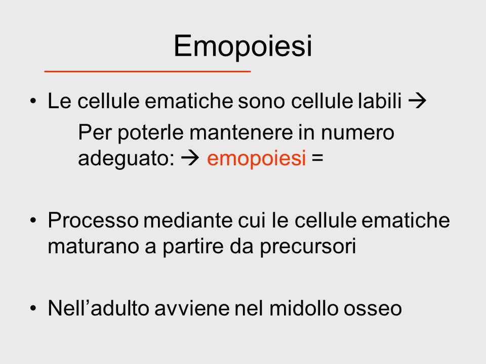Emopoiesi Le cellule ematiche sono cellule labili Per poterle mantenere in numero adeguato: emopoiesi = Processo mediante cui le cellule ematiche matu