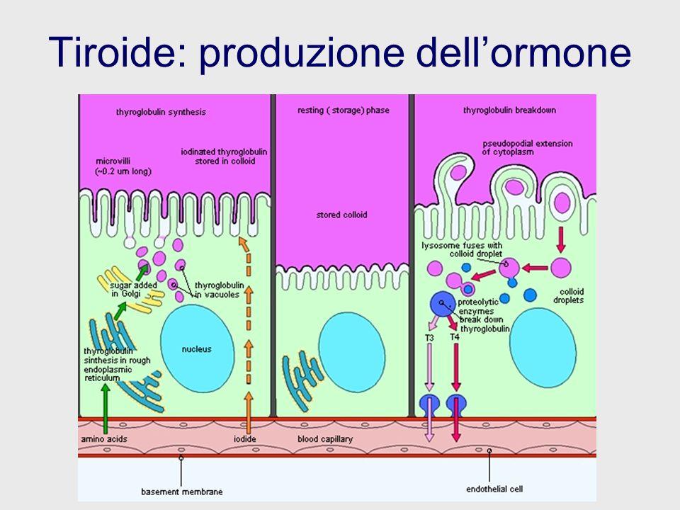 Tiroide: produzione dellormone