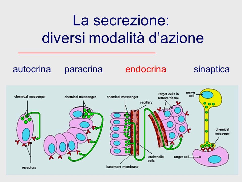 La secrezione: diversi modalità dazione autocrinaparacrinaendocrinasinaptica