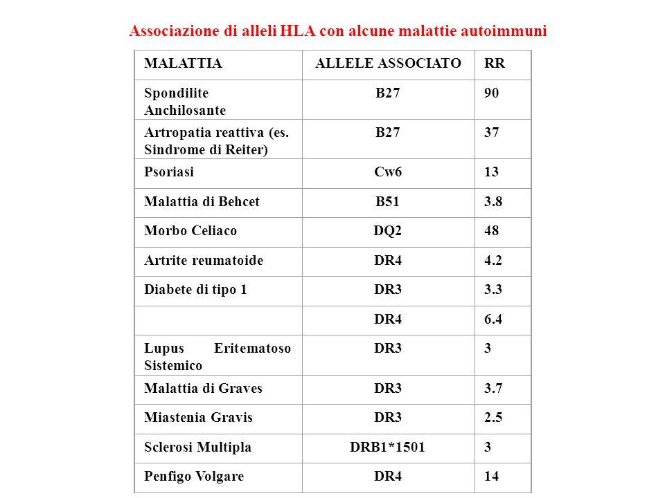 MALATTIAALLELE ASSOCIATORR Spondilite Anchilosante B2790 Artropatia reattiva (es. Sindrome di Reiter) B2737 PsoriasiCw613 Malattia di BehcetB513.8 Mor