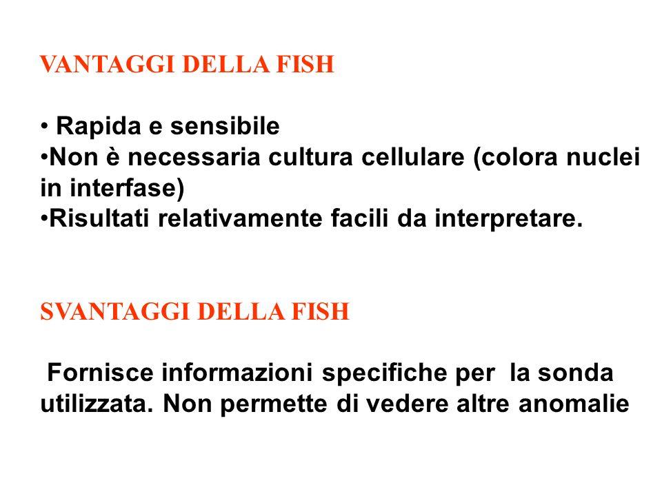 VANTAGGI DELLA FISH Rapida e sensibile Non è necessaria cultura cellulare (colora nuclei in interfase) Risultati relativamente facili da interpretare.