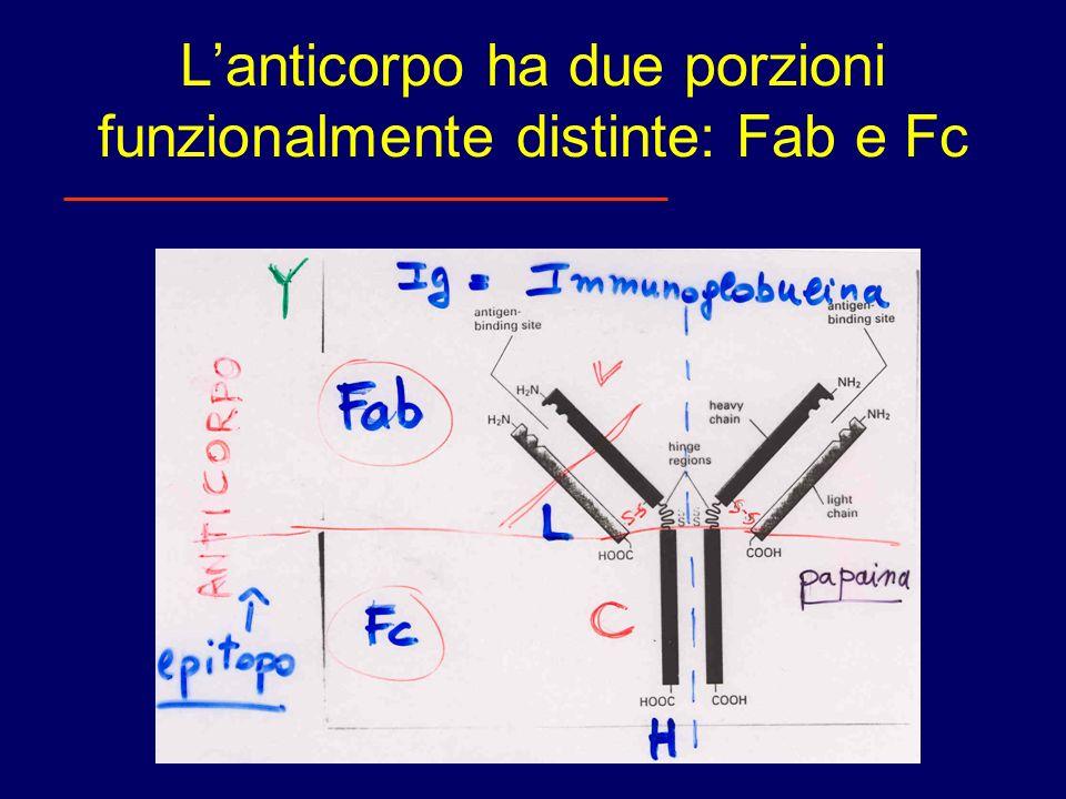 Lanticorpo ha due porzioni funzionalmente distinte: Fab e Fc