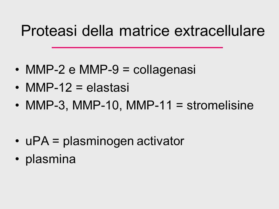 Proteasi della matrice extracellulare MMP-2 e MMP-9 = collagenasi MMP-12 = elastasi MMP-3, MMP-10, MMP-11 = stromelisine uPA = plasminogen activator p