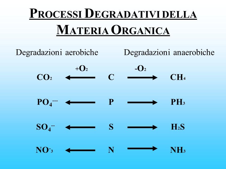 P ROCESSI D EGRADATIVI DELLA M ATERIA O RGANICA Degradazioni aerobicheDegradazioni anaerobiche C P S N CO 2 PO 4 --- SO 4 -- NO - 3 PH 3 CH 4 H2SH2S N