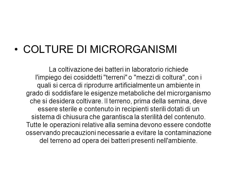 COLTURE DI MICRORGANISMI La coltivazione dei batteri in laboratorio richiede l'impiego dei cosiddetti