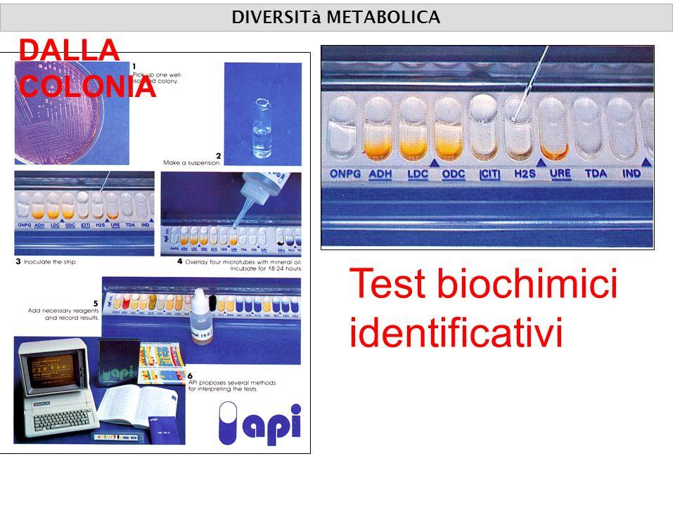 DIVERSITà METABOLICA DALLA COLONIA Test biochimici identificativi