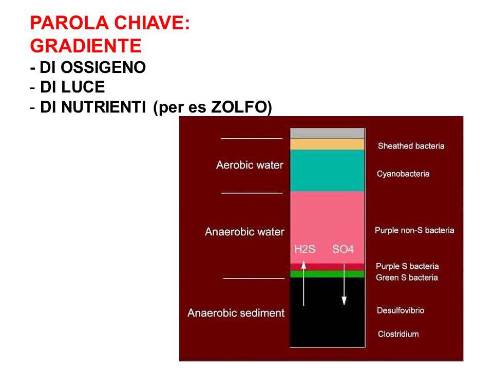 PAROLA CHIAVE: GRADIENTE - DI OSSIGENO - DI LUCE - DI NUTRIENTI (per es ZOLFO)