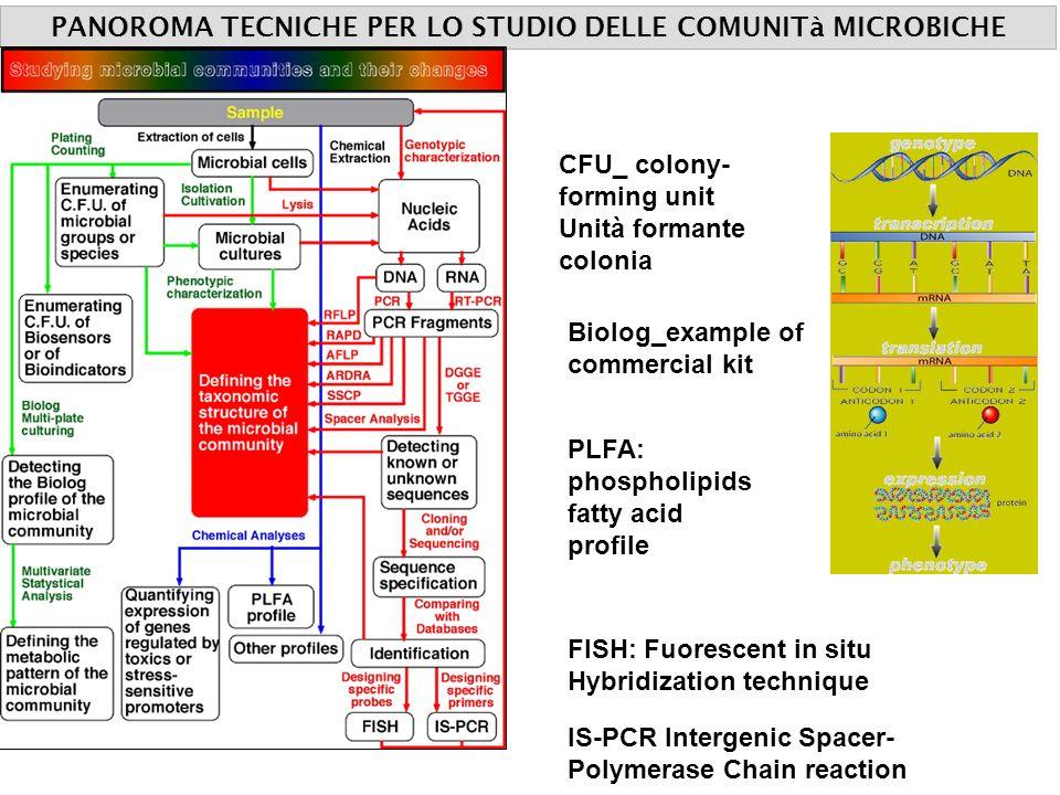 PANOROMA TECNICHE PER LO STUDIO DELLE COMUNITà MICROBICHE CFU_ colony- forming unit Unità formante colonia Biolog_example of commercial kit PLFA: phos