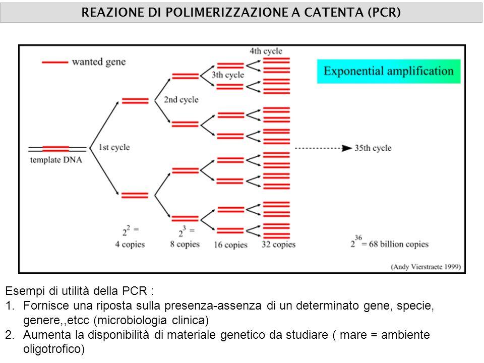 reazione di polimerizzazione a catena REAZIONE DI POLIMERIZZAZIONE A CATENTA (PCR) Esempi di utilità della PCR : 1.Fornisce una riposta sulla presenza