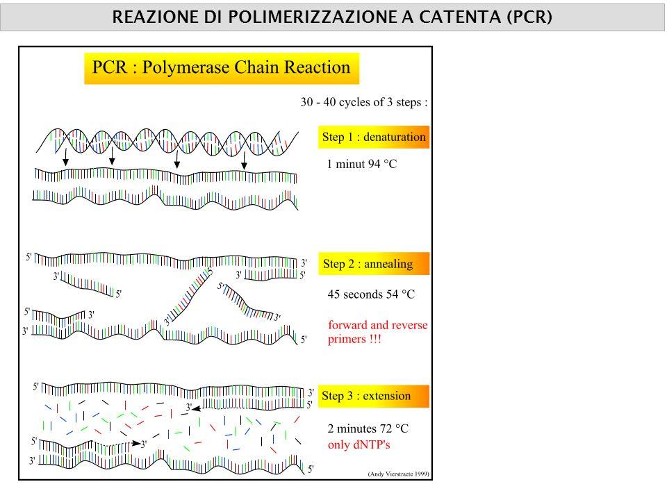 COMPONENTI TEMPERATURA REAZIONE DI POLIMERIZZAZIONE A CATENTA (PCR)