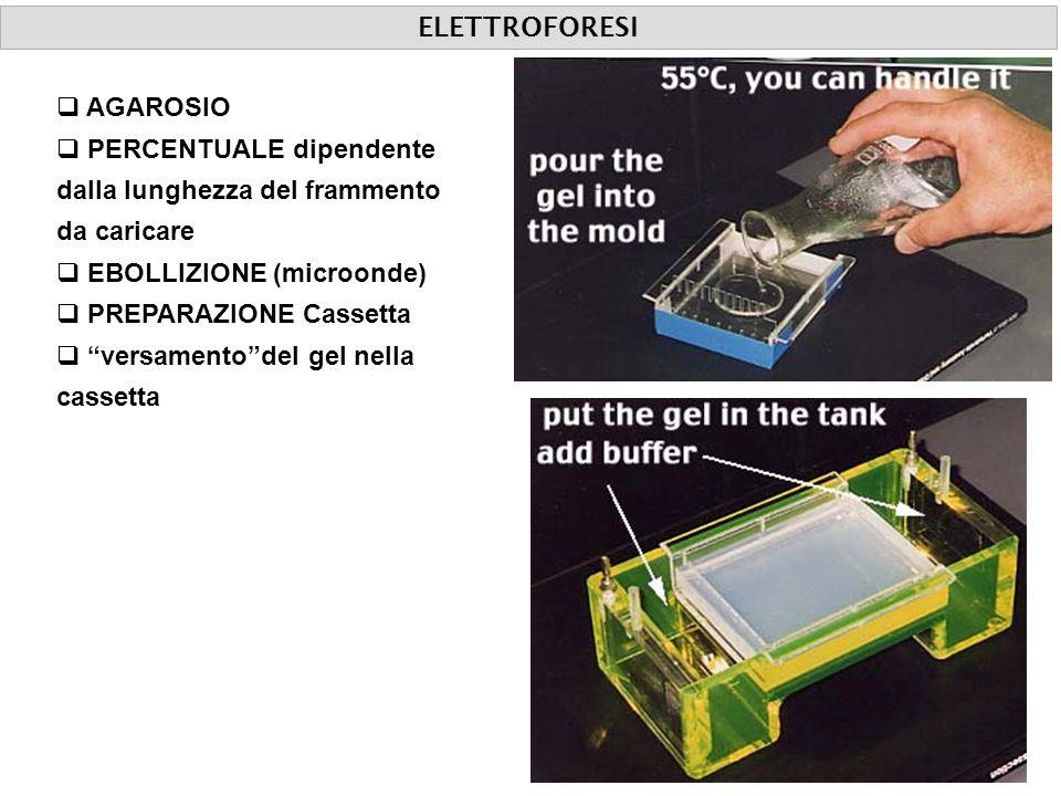 AGAROSIO PERCENTUALE dipendente dalla lunghezza del frammento da caricare EBOLLIZIONE (microonde) PREPARAZIONE Cassetta versamentodel gel nella casset