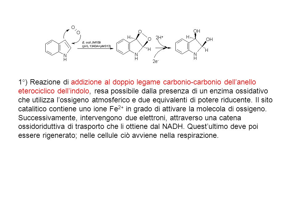 1°) Reazione di addizione al doppio legame carbonio-carbonio dellanello eterociclico dellindolo, resa possibile dalla presenza di un enzima ossidativo