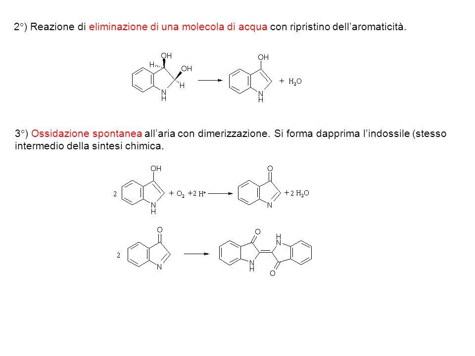 2°) Reazione di eliminazione di una molecola di acqua con ripristino dellaromaticità. 3°) Ossidazione spontanea allaria con dimerizzazione. Si forma d
