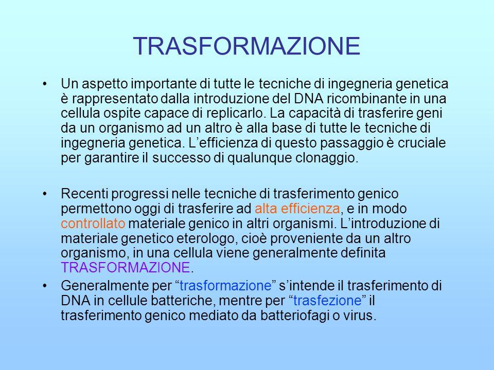 TRASFORMAZIONE Un aspetto importante di tutte le tecniche di ingegneria genetica è rappresentato dalla introduzione del DNA ricombinante in una cellul
