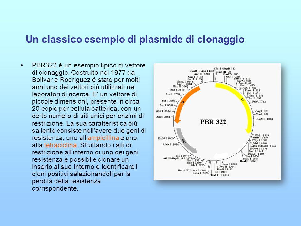 Un classico esempio di plasmide di clonaggio PBR322 é un esempio tipico di vettore di clonaggio. Costruito nel 1977 da Bolivar e Rodriguez é stato per