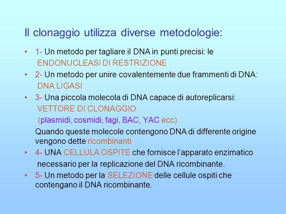 TAPPE CARATTERISTICHE DI UN CLONAGGIO 1- DIGESTIONE (Taglio del DNA da clonare e del vettore di clonaggio) 2- LIGAZIONE (Unione del DNA da clonare e del vettore di clonaggio) 3- TRASFORMAZIONE (inserimento clone in cellula ospite) 4- PIASTRAMENTO (replicazione dei cloni in terreno nutritivo) 5- SELEZIONE ( riconoscimento dei ricombinanti).