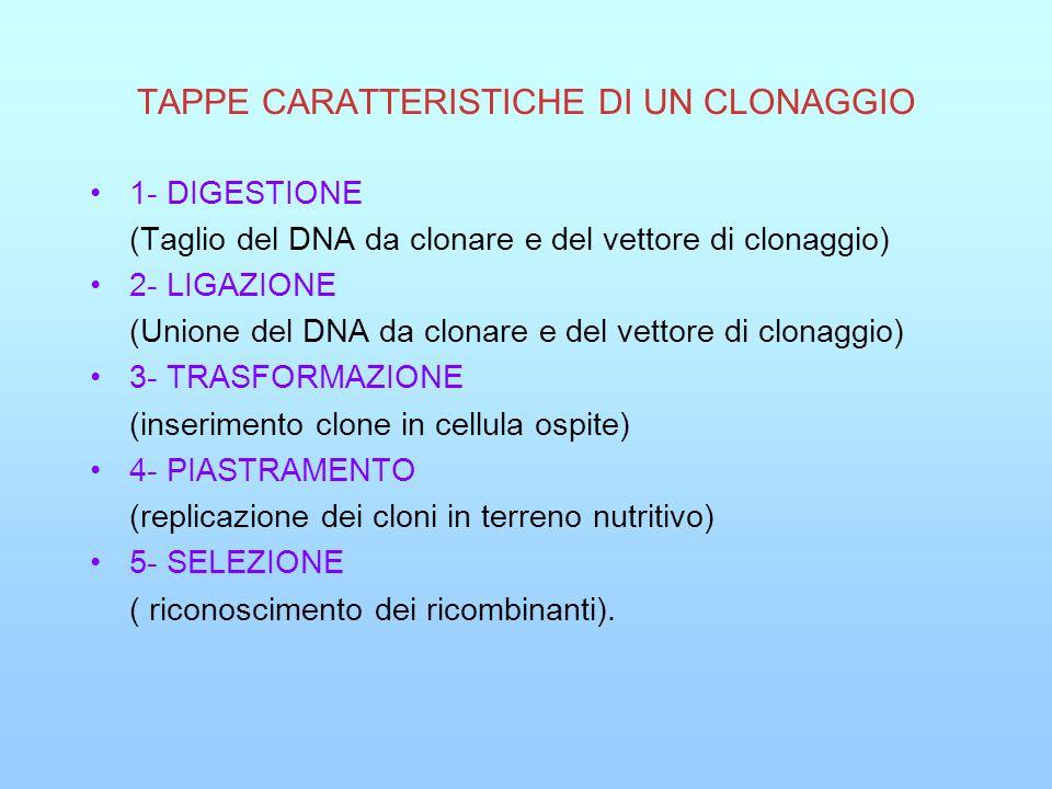 TAPPE CARATTERISTICHE DI UN CLONAGGIO 1- DIGESTIONE (Taglio del DNA da clonare e del vettore di clonaggio) 2- LIGAZIONE (Unione del DNA da clonare e d