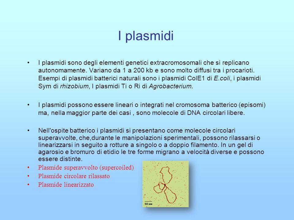 I plasmidi I plasmidi sono caratterizzati da sequenze e regioni specifiche : 1- Una sequenza ori (origine di replicazione che permette al plasmide di replicarsi nelle cellule batteriche).