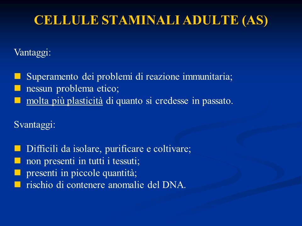 CELLULE STAMINALI ADULTE (AS) Vantaggi: Superamento dei problemi di reazione immunitaria; nessun problema etico; molta più plasticità di quanto si cre